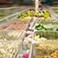 Розвиток ринку заморожених продуктів